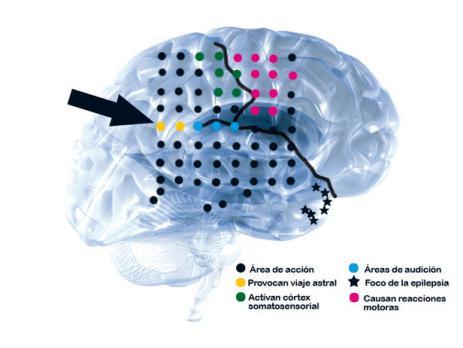 cerebro-y-viaje-astral-psicowisdom.jpg